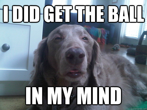 i did get the ball in my mind - i did get the ball in my mind  10 Dog