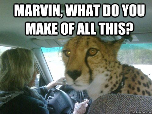 Marvin, what do you make of all this?  - Marvin, what do you make of all this?   Chill Cheetah