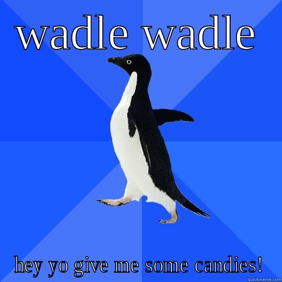 WADLE WADLE HEY YO GIVE ME SOME CANDIES! Socially Awkward Penguin