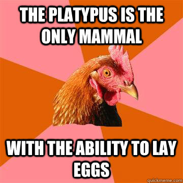 the platypus is the only mammal with the ability to lay eggs - the platypus is the only mammal with the ability to lay eggs  Anti-Joke Chicken