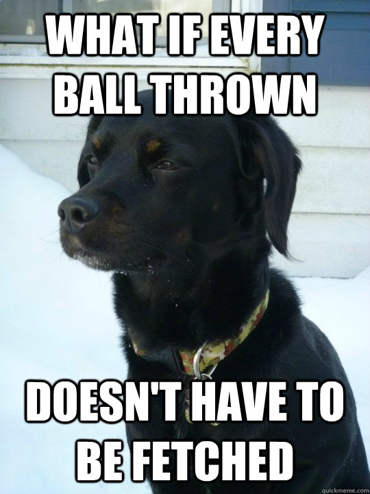 What if every ball thrown Doesn't have to be fetched  Philosophical Puppy