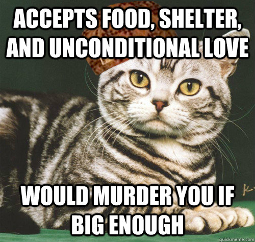 accepts food, shelter, and unconditional love would murder you if big enough - accepts food, shelter, and unconditional love would murder you if big enough  Scumbag Cat