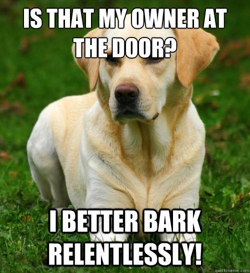 Is that my owner at the door? I better bark relentlessly!   Dog Logic