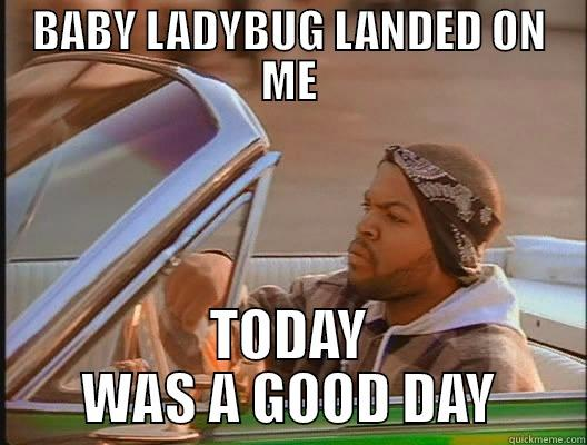 BABY LADYBUG LANDED ON ME TODAY WAS A GOOD DAY today was a good day