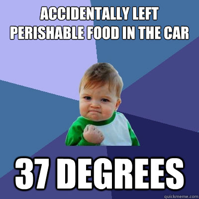 Accidentally left perishable food in the car 37 Degrees  - Accidentally left perishable food in the car 37 Degrees   Success Kid