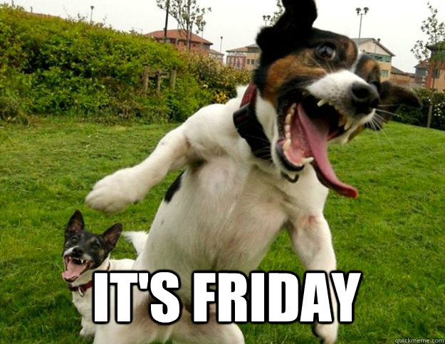 IT's Friday - IT's Friday  insane dog