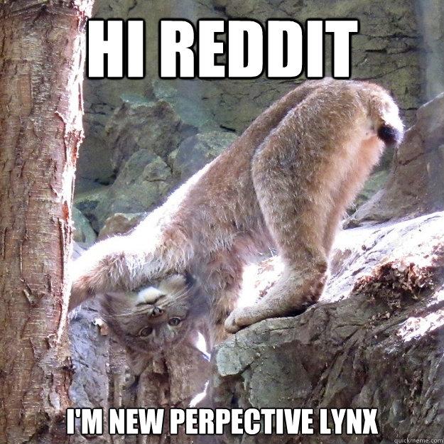 940755ce104325e3a6c0039170fcfe276d8d1a1b2bfb301329915624a2109720 new perspective lynx memes quickmeme