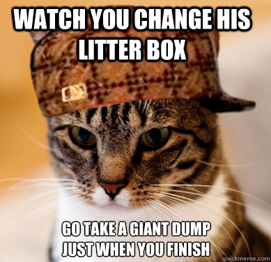 Watch you change his litter box go take a giant dump just when you finish - Watch you change his litter box go take a giant dump just when you finish  Scumbag Cat
