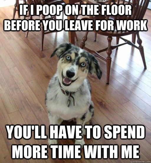 If I poop on the floor before you leave for work you'll have to spend more time with me  Overly Attached Dog