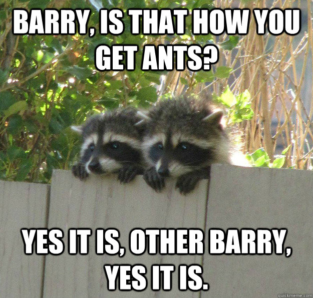 Barry, is that how you get ants? Yes it is, other Barry, yes it is. - Barry, is that how you get ants? Yes it is, other Barry, yes it is.  Overly Observant Racoons