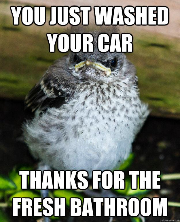 Grumpy Bird Memes Quickmeme