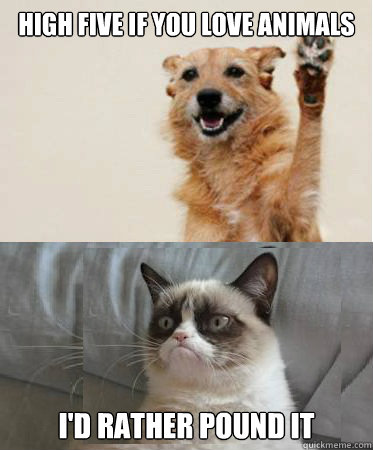 High five if you love animals I'd rather pound it - High five if you love animals I'd rather pound it  High Five Dog Grumpy Cat
