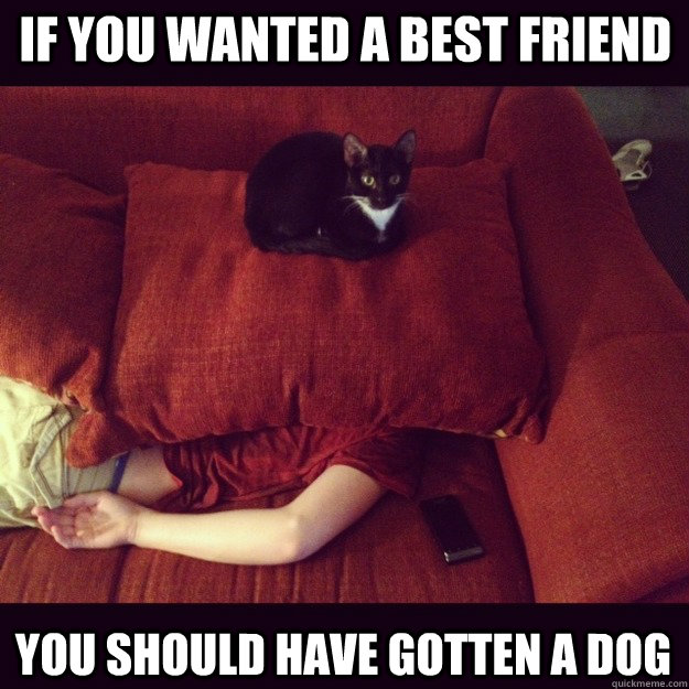 if you wanted a best friend you should have gotten a dog - if you wanted a best friend you should have gotten a dog  jealous cat