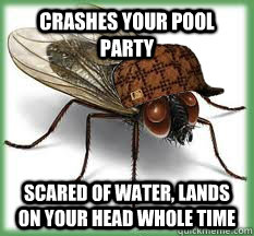 crashes your pool party scared of water, lands on your head whole time - crashes your pool party scared of water, lands on your head whole time  Scumbag Fly