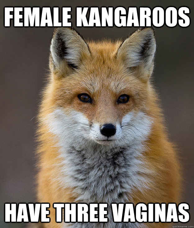 Female Kangaroos Have three Vaginas  - Female Kangaroos Have three Vaginas   Fun Fact Fox