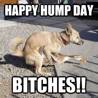happy hump day bitches!!  hump day