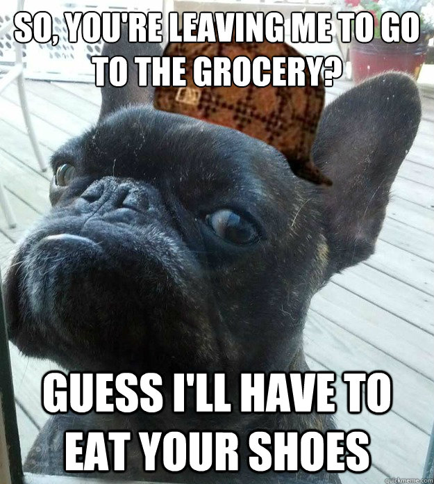 So, you're leaving me to go to the grocery? Guess i'll have to eat your shoes - So, you're leaving me to go to the grocery? Guess i'll have to eat your shoes  Scumbag dog