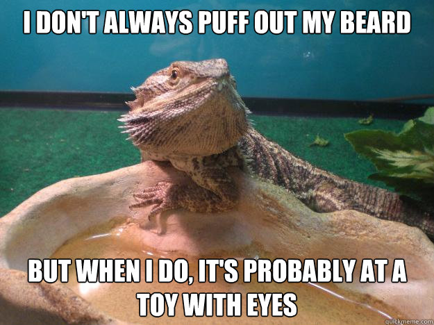 I don't always puff out my beard But when I do, it's probably at a toy with eyes - I don't always puff out my beard But when I do, it's probably at a toy with eyes  Most Interesting Dragon in the World