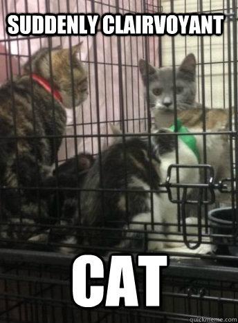 suddenly clairvoyant cat - suddenly clairvoyant cat  Misc