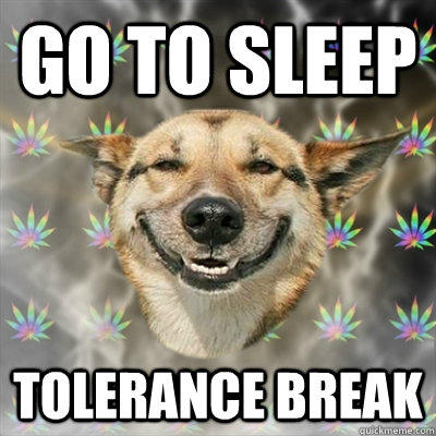 Go to sleep Tolerance Break  Stoner Dog