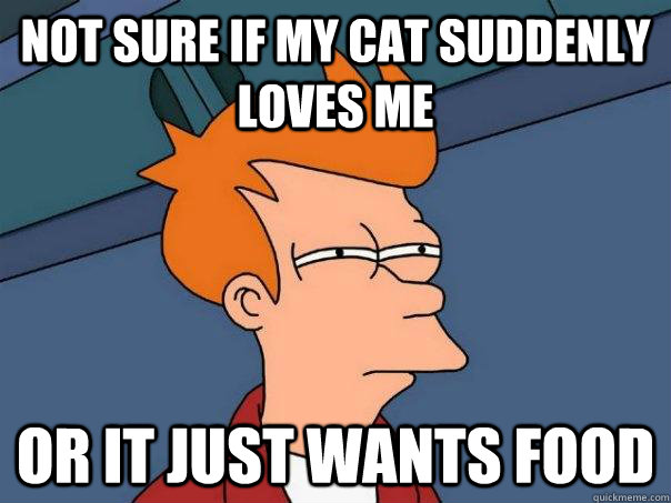 NOT SURE IF MY CAT SUDDENLY LOVES ME  Or IT JUST WANTS FOOD - NOT SURE IF MY CAT SUDDENLY LOVES ME  Or IT JUST WANTS FOOD  Futurama Fry