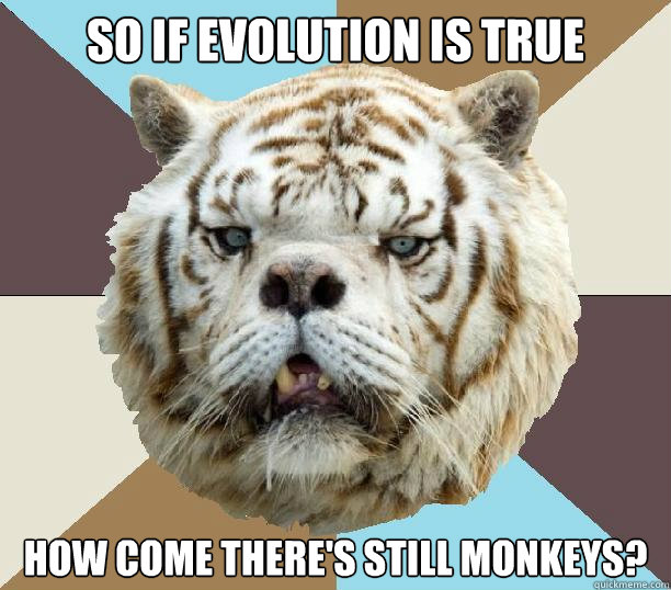 so if evolution is true how come there's still monkeys?