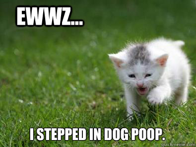 how to make a dog poop quickly