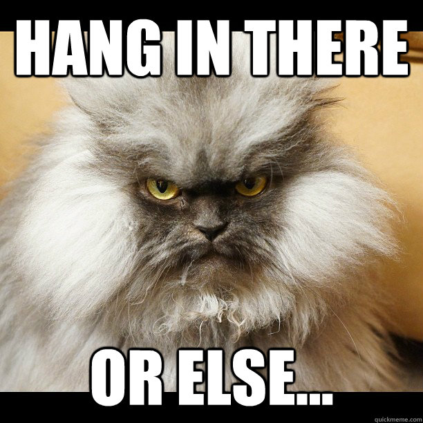 Hang in there or else...  Colonel Meow Tells It