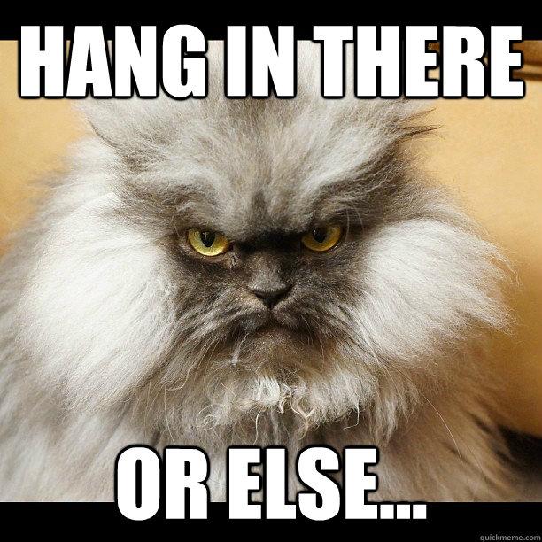 Hang in there or else... - Hang in there or else...  Colonel Meow Tells It