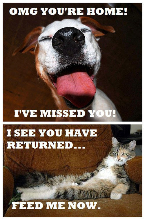 Dogs vs. cats: emotions -   Misc
