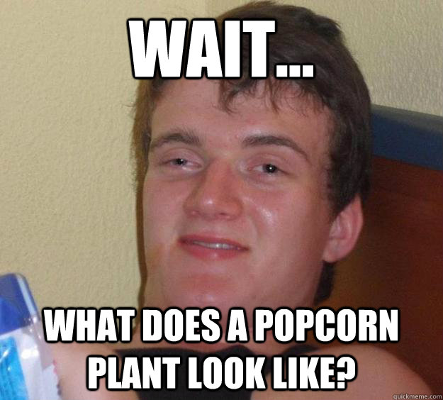 Wait... what does a popcorn plant look like? - Wait... what does a popcorn plant look like?  10 Guy