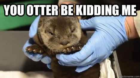 you otter be kidding me