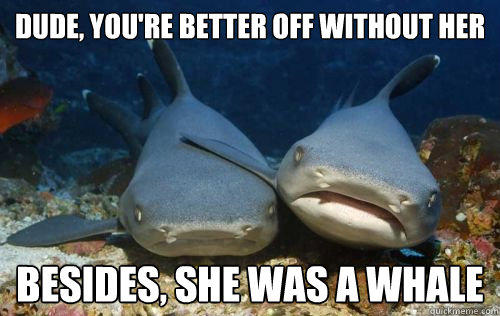Dude, you're better off without her Besides, she was a whale  Compassionate Shark Friend
