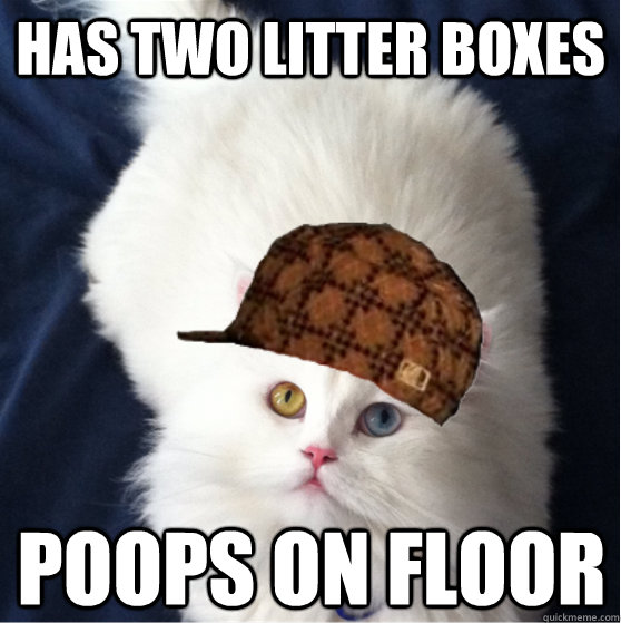 Has two litter boxes Poops on floor - Has two litter boxes Poops on floor  Misc
