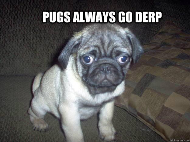 pugs always go derp