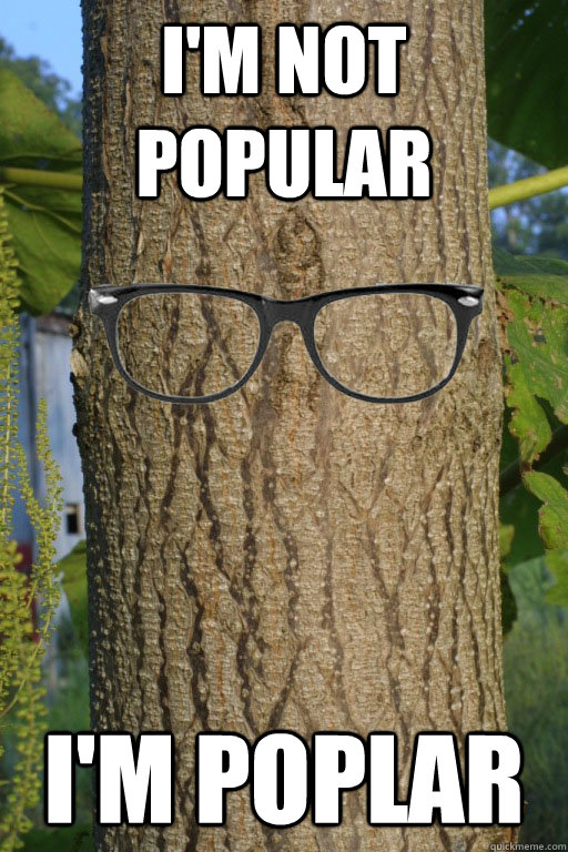 I'm not popular I'm poplar