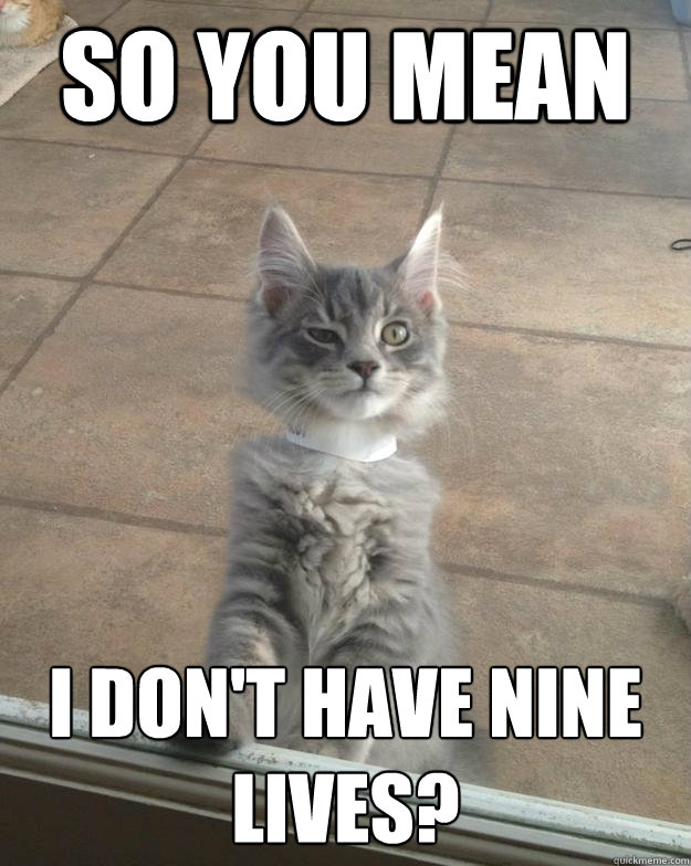 So you mean I don't have nine lives? - So you mean I don't have nine lives?  Skeptical Kittens realization