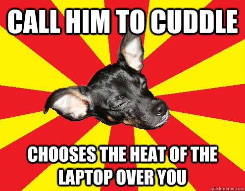 call him to cuddle chooses the heat of the laptop over you