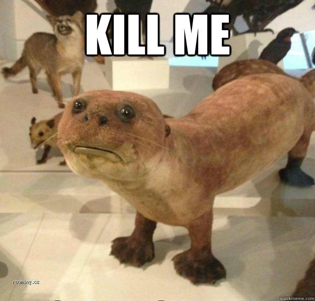 kill me   betrayed otter