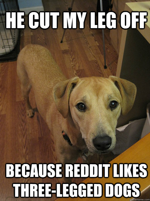 He cut my leg off because reddit likes three-legged dogs