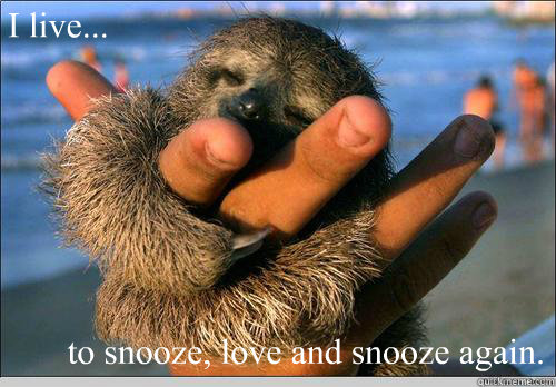 I live... to snooze, love and snooze again.  cute baby sloth