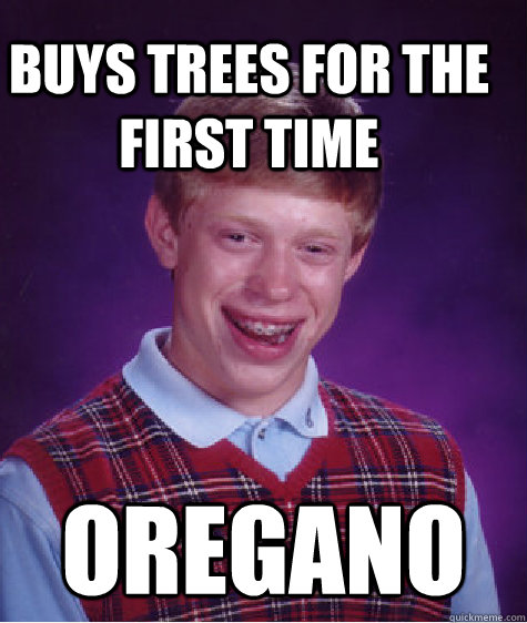 Buys trees for the first time Oregano