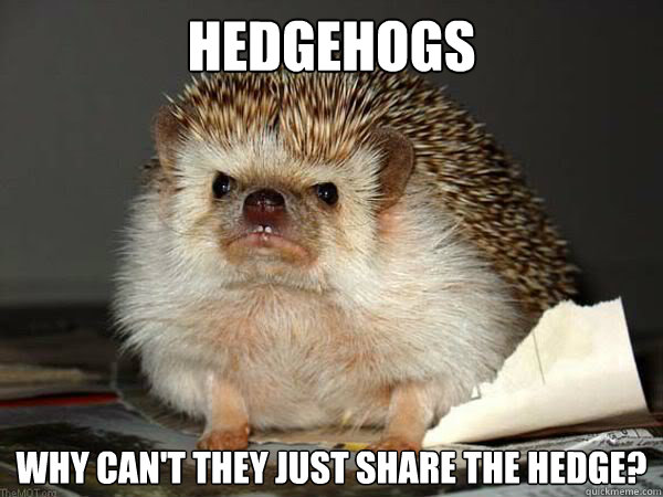 5db9e7046 Hedgehogs Why can't they just share the hedge? - Angry Hedgehog ...