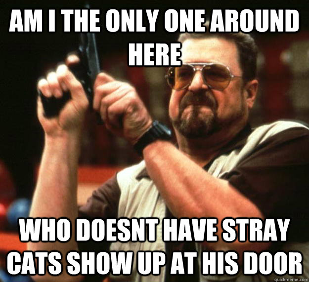 am I the only one around here who doesnt have stray cats show up at his door - am I the only one around here who doesnt have stray cats show up at his door  Angry Walter