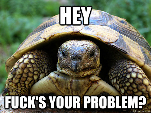 Hey fuck's your problem? - Hey fuck's your problem?  Angry Turtle