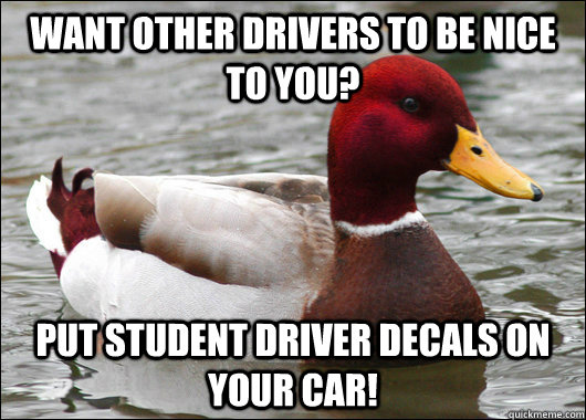 Want other drivers to be nice to you? Put student driver decals on your car! - Want other drivers to be nice to you? Put student driver decals on your car!  Malicious Advice Mallard