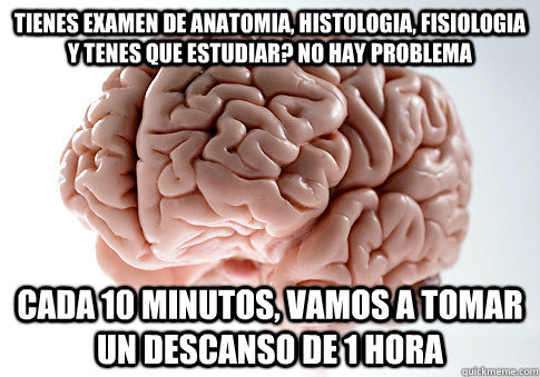 La Hora De Estudiar Anatomía - SEO Start