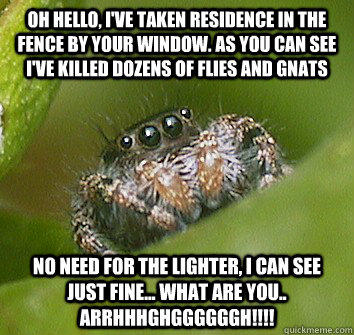 Oh hello, I've taken residence in the fence by your window. As you can see I've killed dozens of flies and gnats No need for the lighter, I can see just fine... what are you.. ARRHHHGHGGGGGGH!!!!  Misunderstood Spider