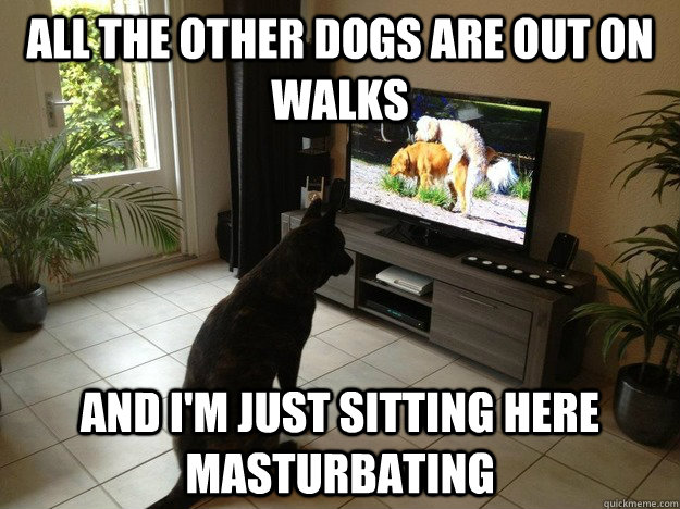 All the other dogs are out on walks and I'm just sitting here masturbating  Porno Dog