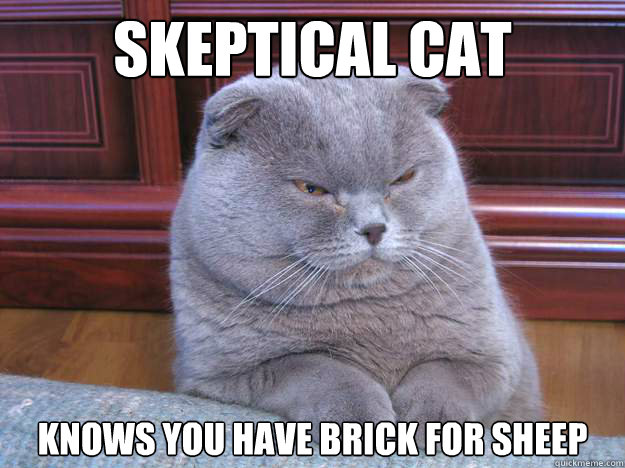 Skeptical cat Knows you have Brick for sheep